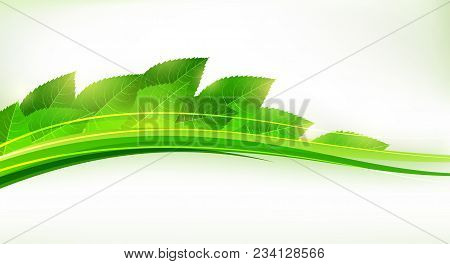 Fresh Green Leaves Forming A Wave. Cool Eco Banner. Eps10 Vector