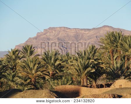 Green Palm Trees In Oasis Landscapes In Central Morocco In Old Village Of Oulad Near Zagora City, At