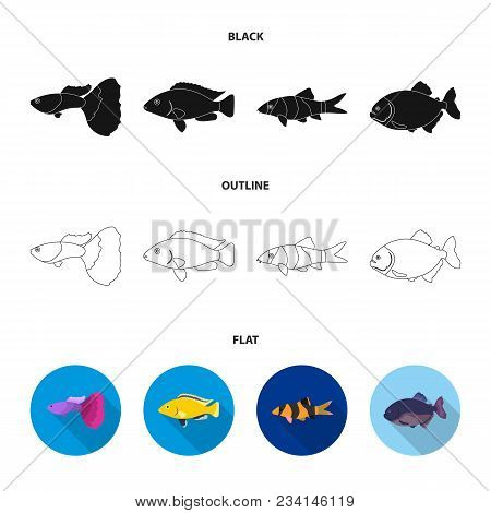 Botia, Clown, Piranha, Cichlid, Hummingbird, Guppy, Fish Set Collection Icons In Black, Flat, Outlin