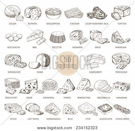 Sketches Of Cheese Types. Gouda And Burrata, Cheddar And Radamer, Ricotta And Roquefort, Mozzarella