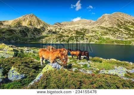 Beautiful Summer Landscape, Horse Herd In Field Near Bucura Alpine Lake. Mare And Foal Grazing In Re