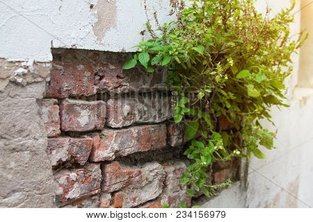 Brick Wall With Trees For Decorate Garden.  Interiors Concept.