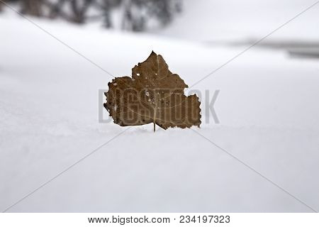 Prairie Winter Scene