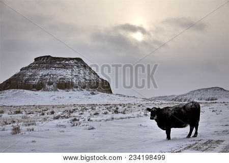 Winter Scene Saskatchewan Badlands