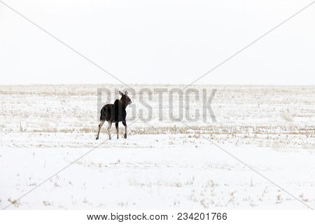 Hoar Frost Prairie In Saskatchewan Canada Winter Cold