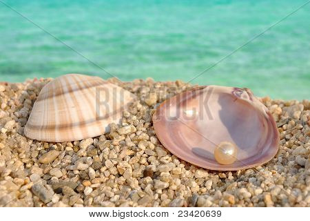 Sea Shell And The Pearl