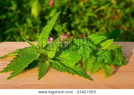 Nettle With Aise-weed On A Board
