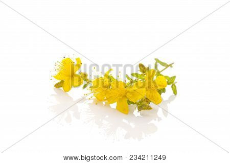 Healthy Hypericum Flowers