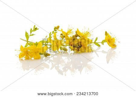 A Branch Of St. John's Wort.