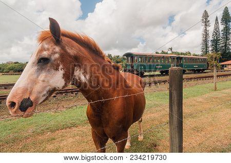 Kauai Island, Usa, Hawaii. April 10, 2017. Beautiful Horse By The Wailua Train Wagon.
