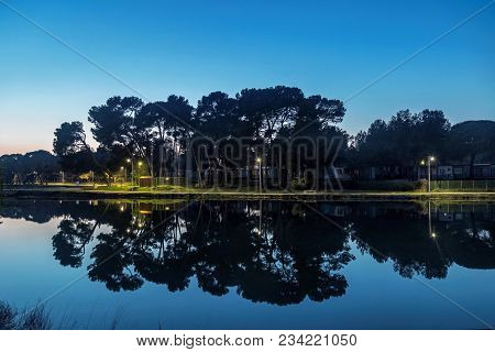 Pine Trees With Reflection At Evening In Campsite In Valbandon, Pula, Croatia
