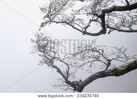 Winter White Snow Ice Field Covering Dry Brown Red Tree Branch Forest, Large Land Ground Field Below