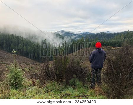 Hunter With His Back To The Camera Facing Towards A Clearcut Looking For Elk In A Tree Farm In Orego
