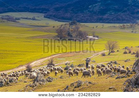 Sheep Pastor Descending From The Mountain On Spring Day