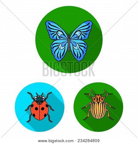 Different Kinds Of Insects Flat Icons In Set Collection For Design. Insect Arthropod Vector Symbol S
