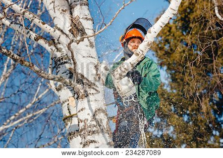 Man Sawmill Saws Tree With Chainsaw At Height. Concept Of Cutting Down Trees.