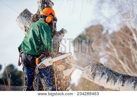 Man Saws Sawmill With Chainsaw At Height With Insurance. Concept Of Cutting Down Trees With Help Of