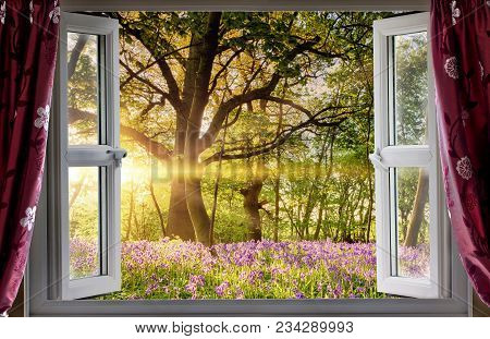 Window Open Onto Bluebell Forest Woodland Sunrise In The Morning Light. Fresh Landscape View From In