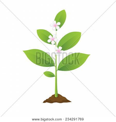 Planting And Blooming Tree, Flower Realistic Vector Illustration, Seedling Gardening Plant, Growing