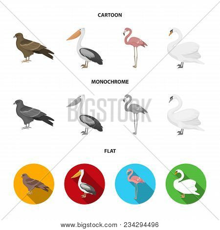Kite, Pelican, Flamingo, Swan. Birds Set Collection Icons In Cartoon, Flat, Monochrome Style Vector