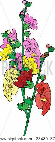 Bouquet Of Three Flowers Mallow Yellow, Red And Pink With Green Stems Isolated On White Background