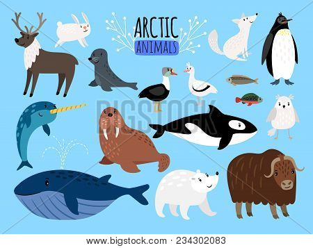 Arctic Animals. Cute Animal Set Of Arctic Or Alaska Vector Illustration For Education, Penguin And P