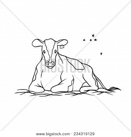 Vector Farm Animal. Cow Young Red Spotted With Tag On Ear Lying On Hay And Chews Grass, Flying Aroun
