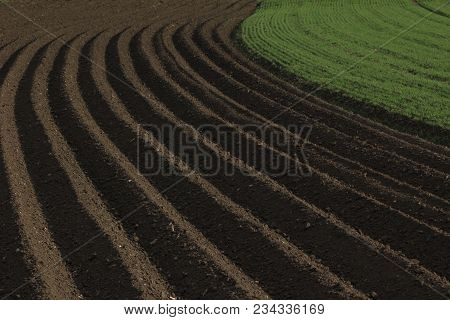 Fertile Soil As Basis For A Functional Agricultural Cultivation