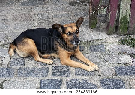 Mutt Dog Looking Worried Parallelepiped Floor Day