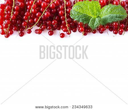 Red Currants At Border Of Image With Copy Space For Text. Ripe Red Currants With A Mint Leaf On Whit