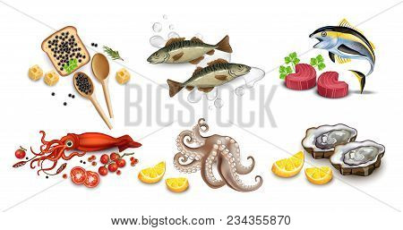 Tuna Fish, Caviar, Squid, Oysters And Octopus Seafood Set. Vector Realistic Detailed Illustration