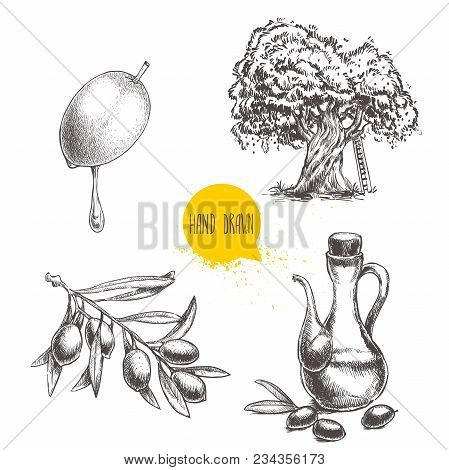 Olives Fruit, Branch, Tree And Olive Oil Bottle Sketches Set. Hand Drawn Vector Illustrations Isolat