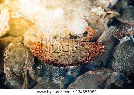 Fresh Raw Flower Crab At Seafood Market