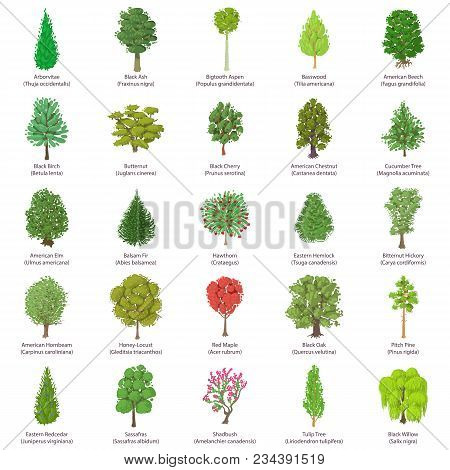 Tree Types Icons Set. Isometric Illustration Of 25 Tree Types Vector Icons For Web