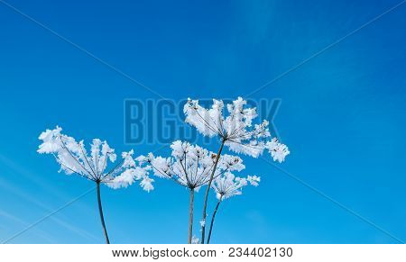 Crystal Snow-flowers Against The Blue Sky.