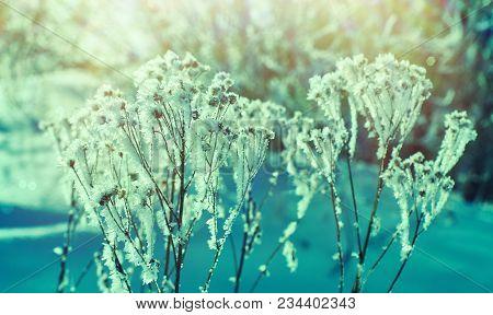 Crystal Snow-flowers