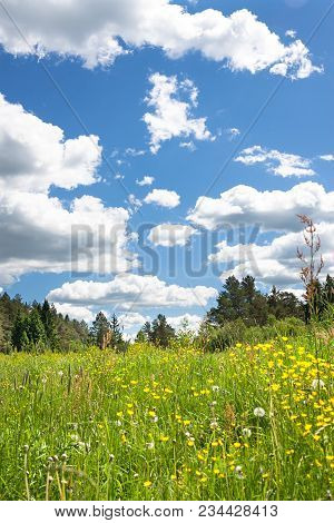 Beautiful Rural Summer Landscape With Flowering Wild Flowers On Meadow And With Blue Sky, White Clou