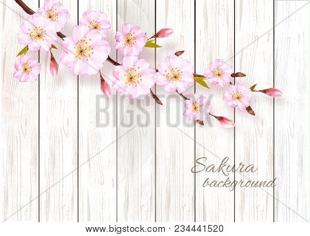 Nature Spring Background With Beautiful Blossoming Sakura On Wooden Sign. Vector.