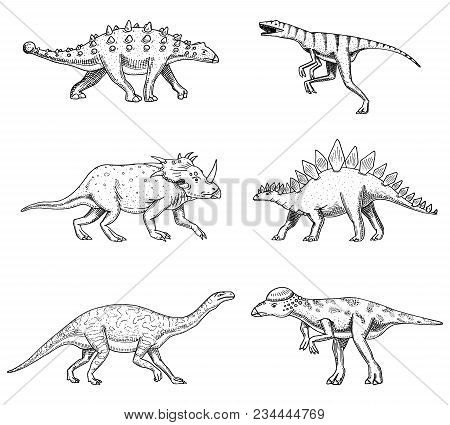 Dinosaurs Set, Triceratops, Barosaurus, Broad Lizard, Stegosaurus, Pachycephalosaurus, Diplodocus, A
