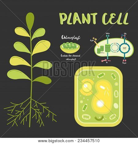 Inside Theplant Cell Structure Illustration Education Science