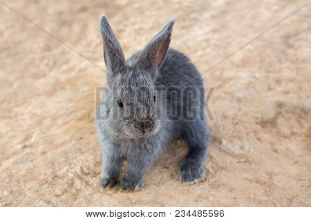 One Rabbits Eat Hay In Contact Zoo