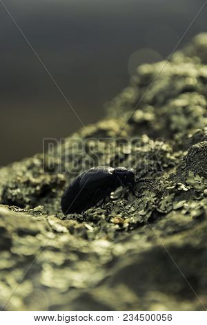 Close up shot of a black bug on the rock in the nature. Bug on the gray rock. Lonely black bug. Sunny day in the Nature.