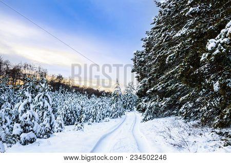 Winter Landscape. Winter Wonderland With Forest Snowy Winter Trees. Cold Toned Winter Landscape Scen