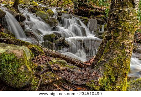 Moss Covered Tree And Stream In Smoky Mountains