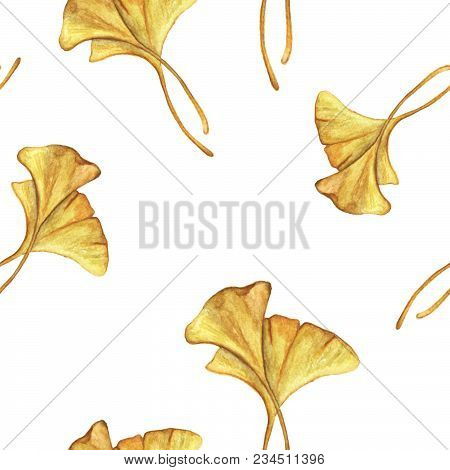 Seamless Pattern With Yellow Ginkgo Leaves On White Background, Watercolor Background Pattern.