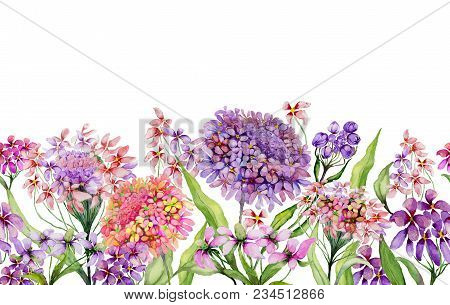 Colorful Summer Wide Banner. Beautiful Vivid Iberis Flowers With Green Leaves On White Background. H