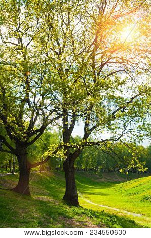 Spring Colorful Landscape, Spring Trees In The Park. Green Park Spring Trees And Sunlight Shining Th