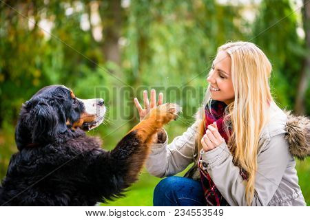 Dog shaking hands with paw to his woman in autumn park
