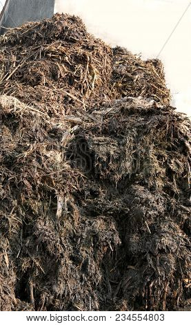 Huge Heap Of Smelly Manure To Spread On The Field To Make It Very Fertile