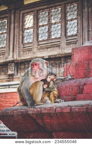 Macaque Monkeys At Swayambhunath Stupa (the Monkey Temple), Kathmandu, Nepal